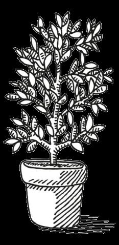 Solid Sources - plant pot tree